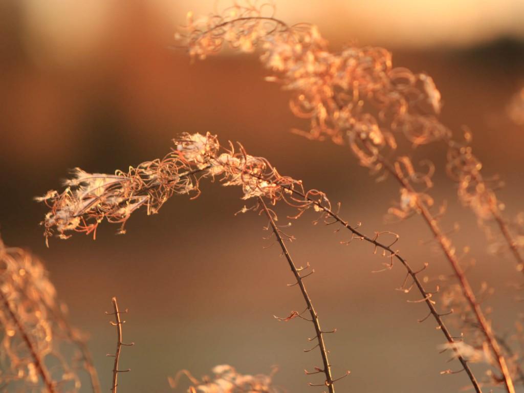 Heinänkorsi ilta-auringossa