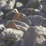 Lehdet Kivikossa