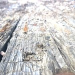 Old Rotted Board