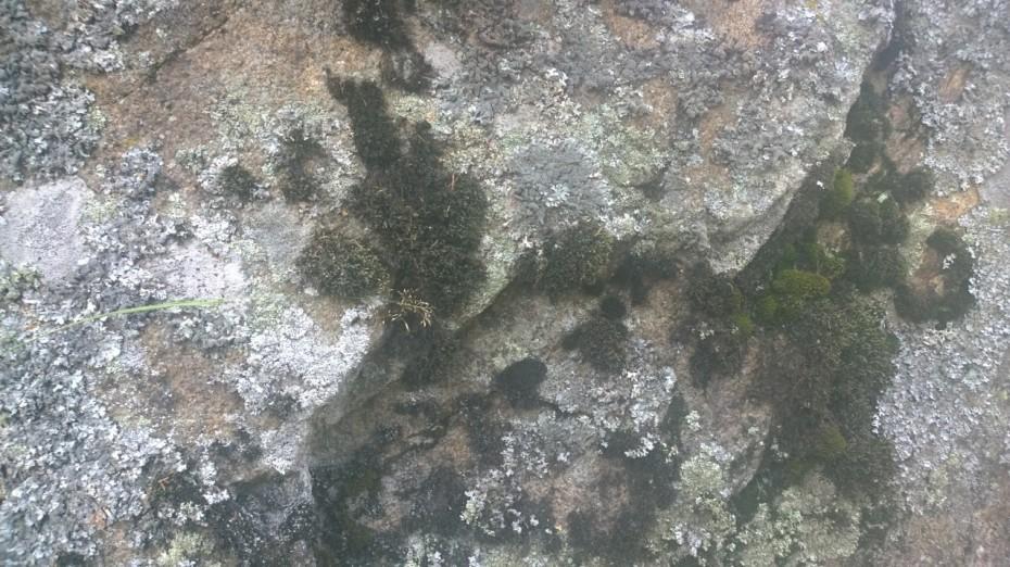 Sammalta kivessä