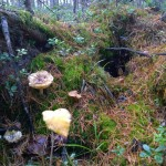 Mushrooms in autumn forest