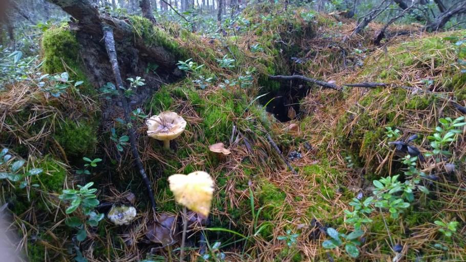 Sieniä syksyisessä metsässä