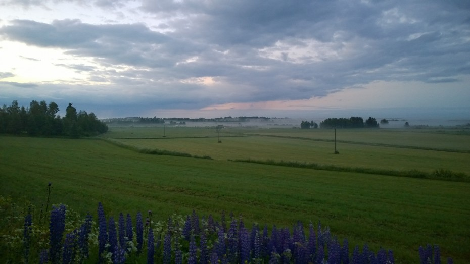 Foggy fields at summer night